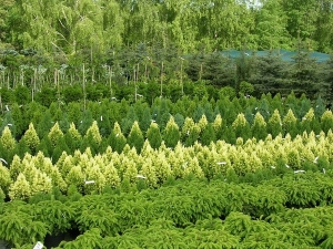 rośliny do ogrodu_4